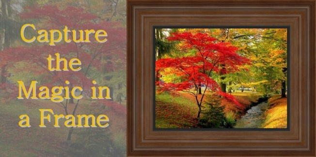 Custom frame Nature Photographs