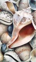 Shells III by Karen Eckelmeyer