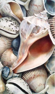 Shells III by Karen Eckelmeyer