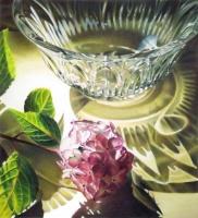Pink Beauty by Karen Eckelmeyer