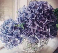 Blue Hydrangeas giclee by Karen Eckelmeyer