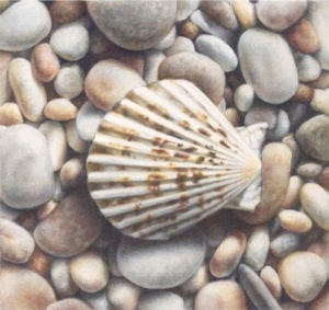 Scallop shell, colored pencil art