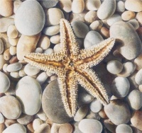 Starfish by Karen Eckelmeyer