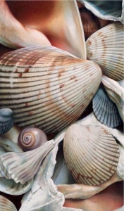 Shells I by Karen Eckelmeyer