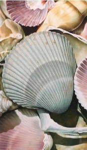 Shells II by Karen Eckelmeyer