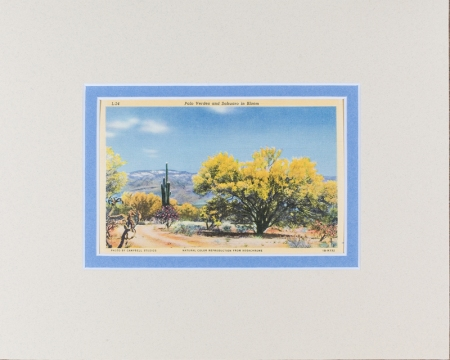 Palo Verde, Arizona Postcard