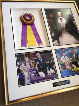 Framed Dog photos and Ribbon